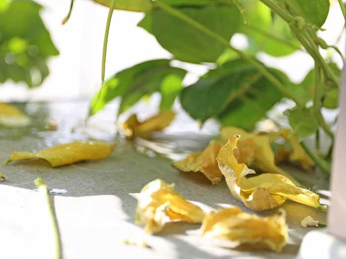 落ち葉が増えてきた小豆