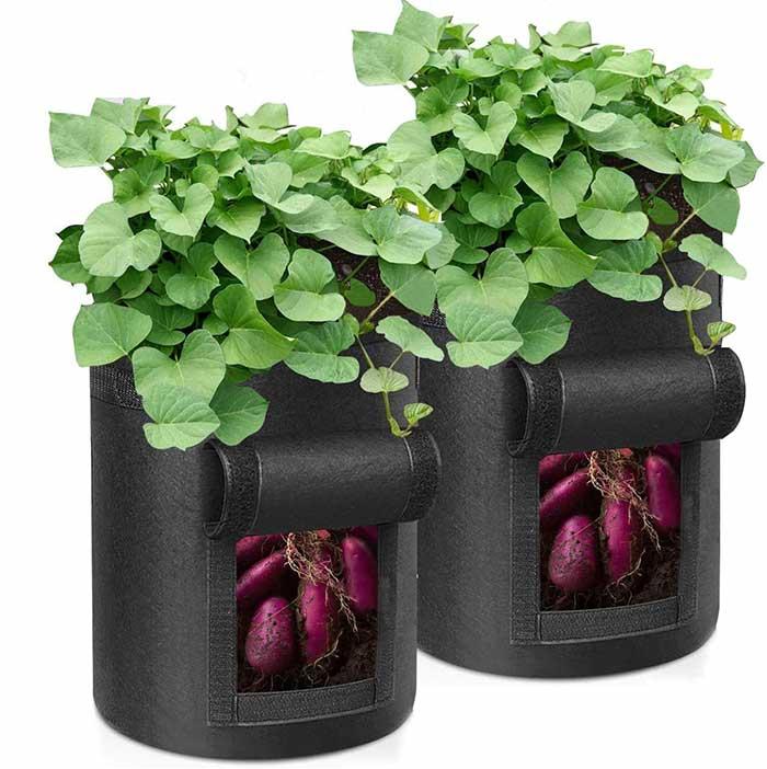 サツマイモ栽培用バッグ