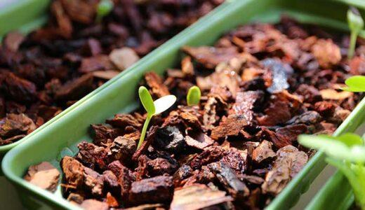 スイカをベランダでほぼ水耕栽培!なかなか発芽しない種がついに発芽したよ!