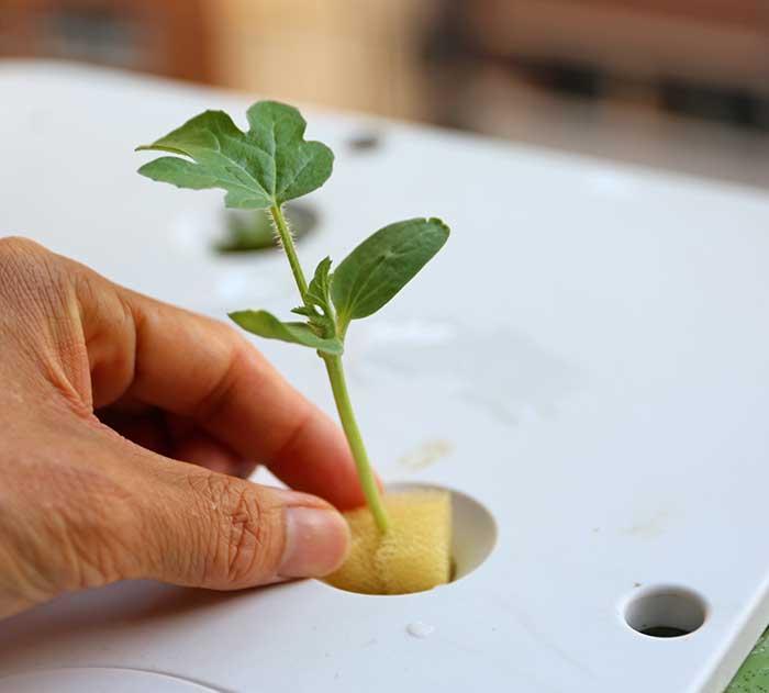 水耕栽培キットに挟む