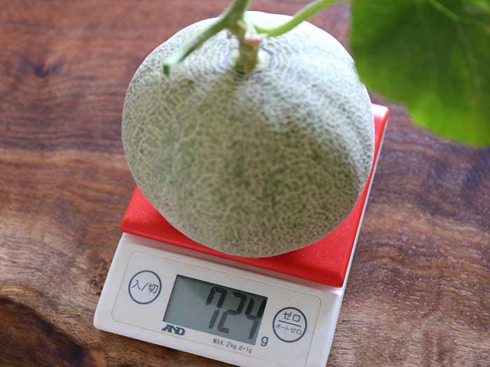 収穫したメロンの重さは?